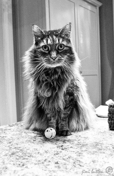 cosmo cat