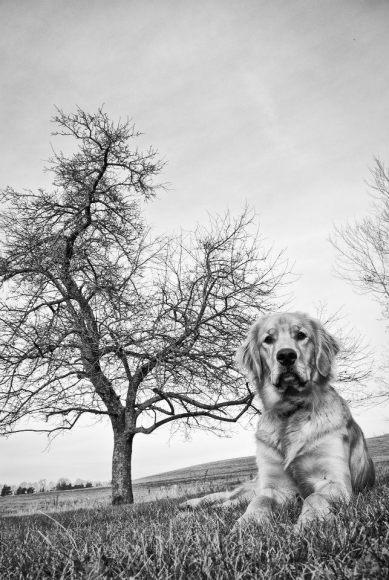dog tree